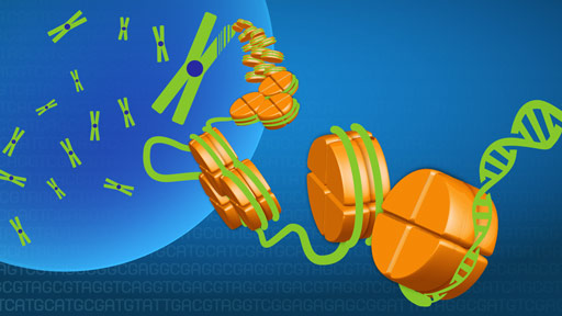Fact Sheets about Genomics | NHGRI