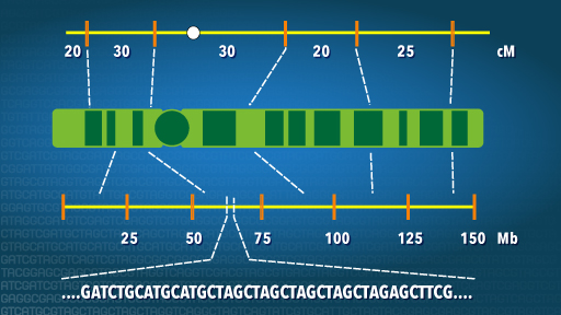 Genetic Mapping Fact Sheet | NHGRI