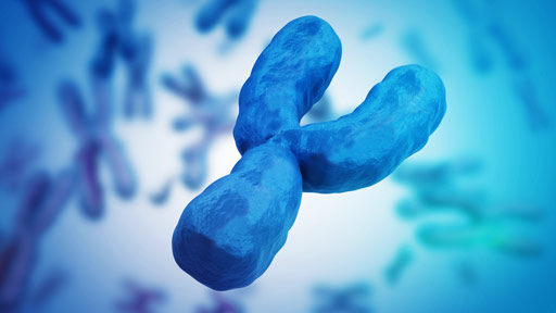 Y Chromosome Fact Sheet | NHGRI
