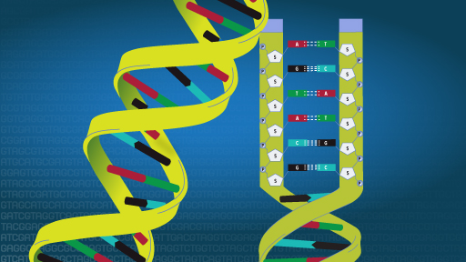 Deoxyribonucleic acid (DNA) Fact Sheet | NHGRI