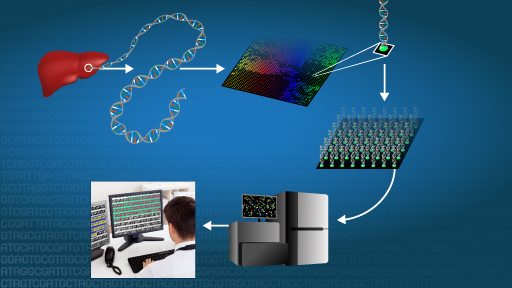 DNA Sequencing Fact Sheet | NHGRI