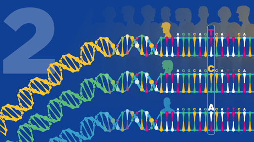 ​15 for 15: Human Genomic Variation | NHGRI