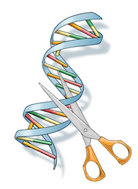 DNA double helix with a pair of scissors