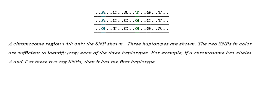 Four chromosome regions showing only SNPs