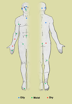 This illustration depicts 20 sites on the human body targeted for analysis of microbial genome sequencing