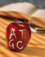 An apple with the letters A T C G carved