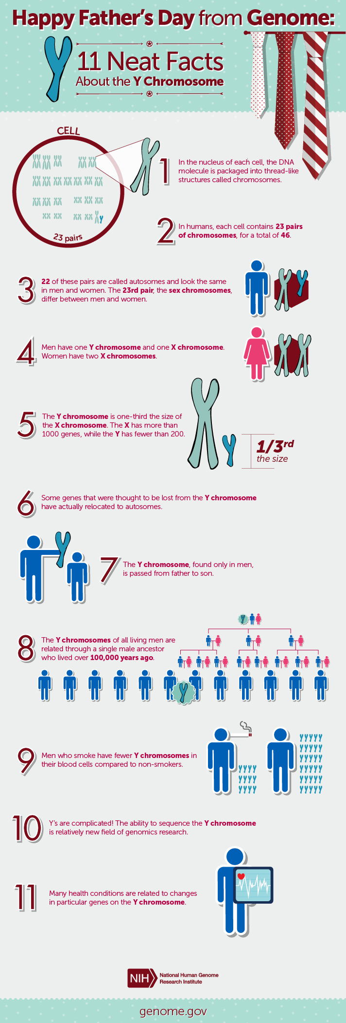 y chromosome fact sheet