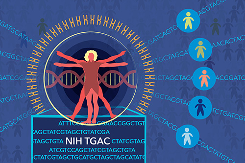 The Genomic Ascertainment Cohort (TGAC) offers a paradigm-shifting approach to studying the phenotypic consequence of human genetic variation. Image Credit: Darryl Leja, NHGRI.