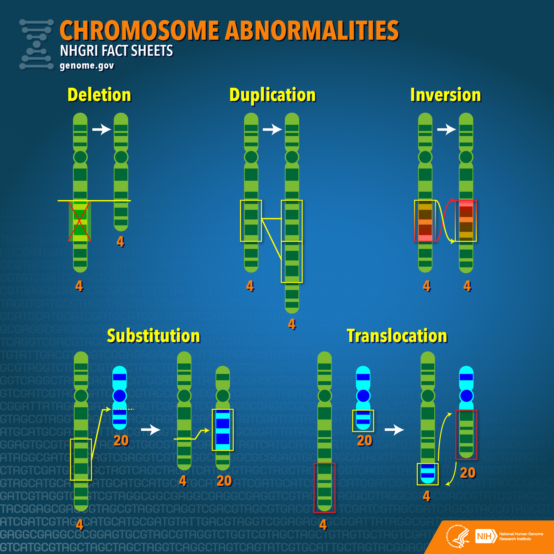 chromosome abnormalities diagram