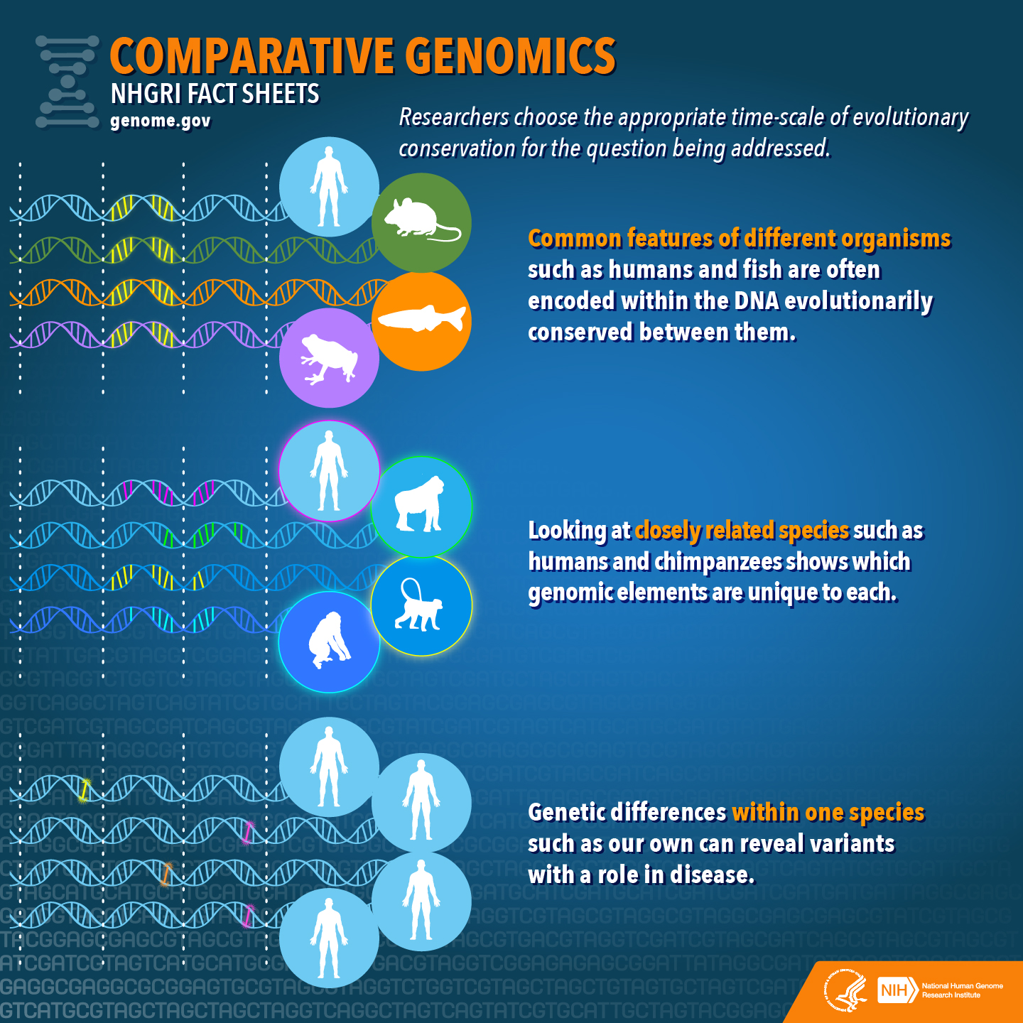 Comparative Genomics Fact Sheet