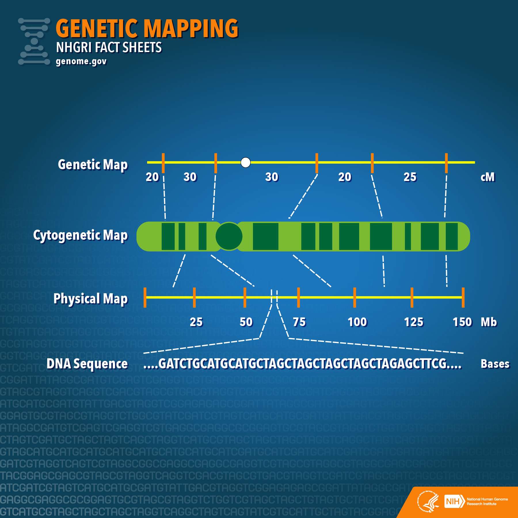 Genetic Mapping Fact Sheet | NHGRI on gene mapping examples, gene markers regional map, gene maps fly,