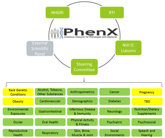 Phenx Organization Graphic
