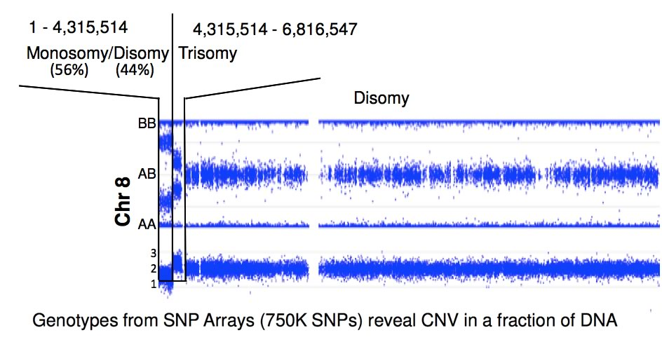 Genotypes from SNP Arrays reveal CNV in a fraction of DNA