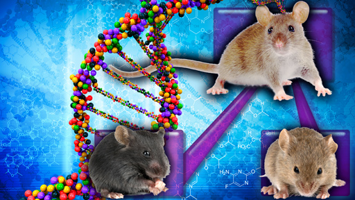 Mice and genes