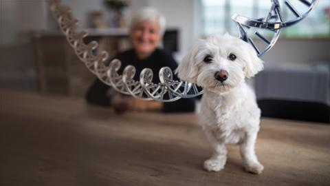 Dogs and aging