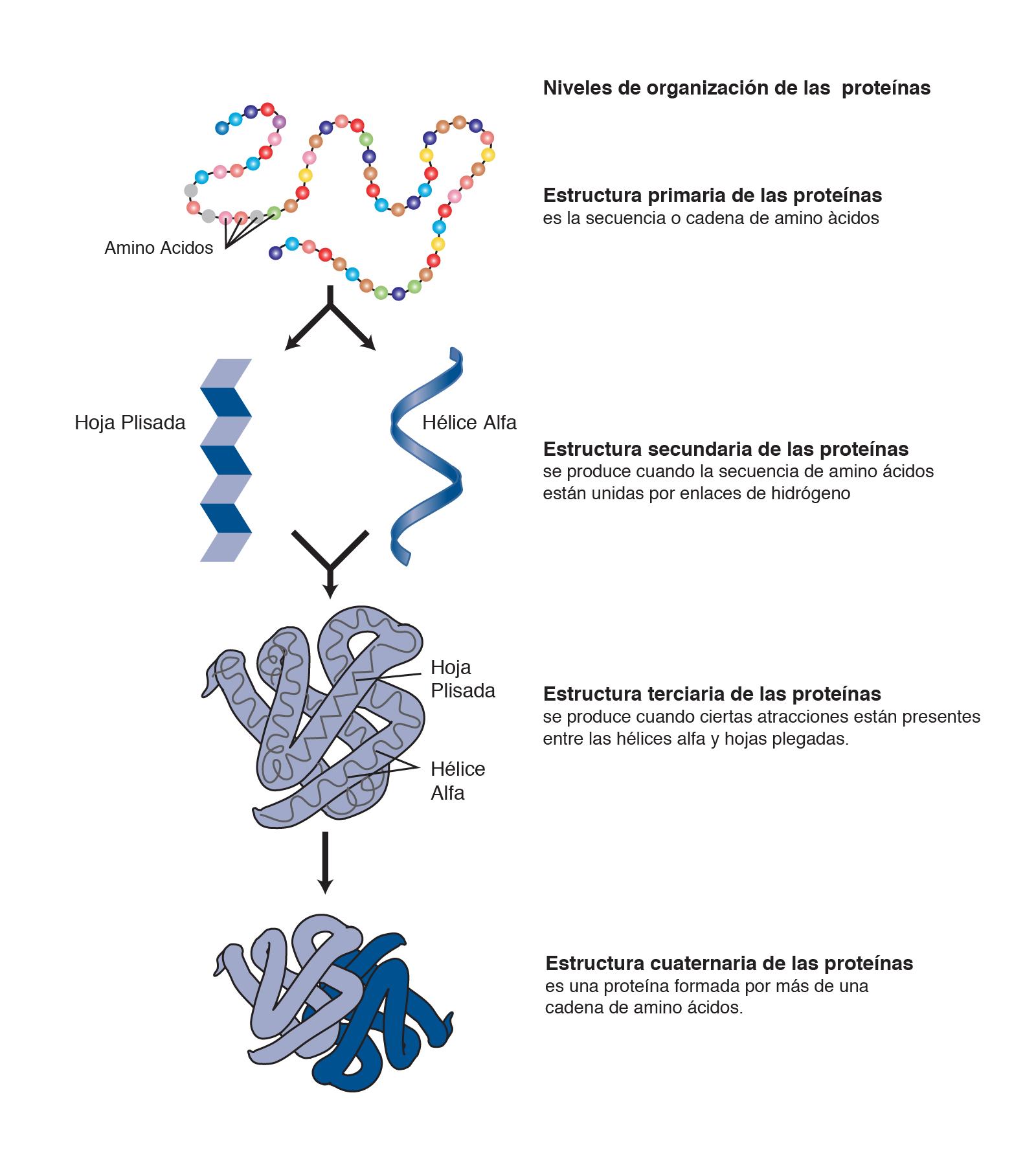 Proteína Nhgri