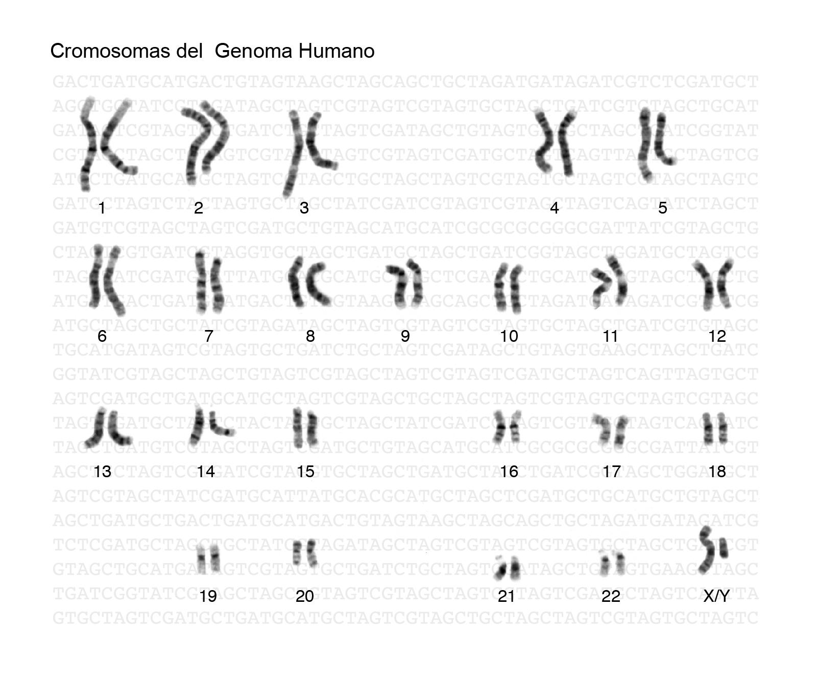 Genoma | NHGRI