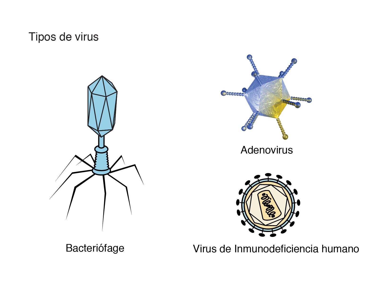 Virus | NHGRI